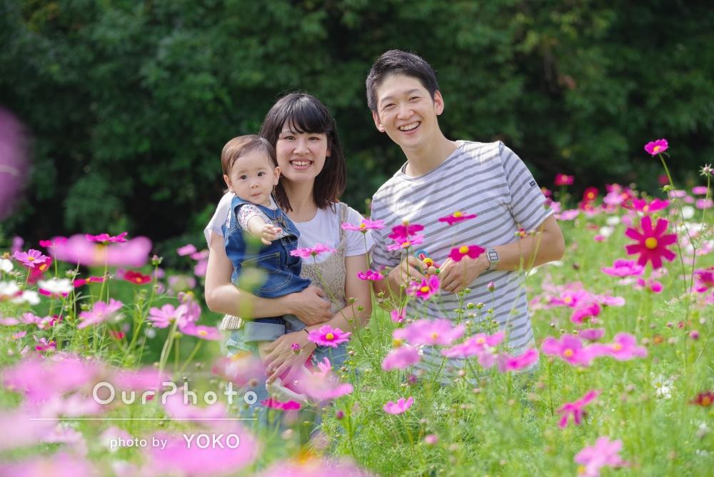 コスモス畑で家族写真