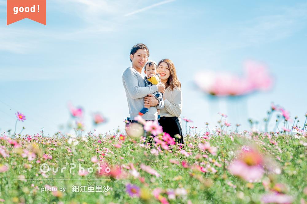フォトギャラリー「コスモスに囲まれて幸せと家族愛を感じる家族写真の撮影」
