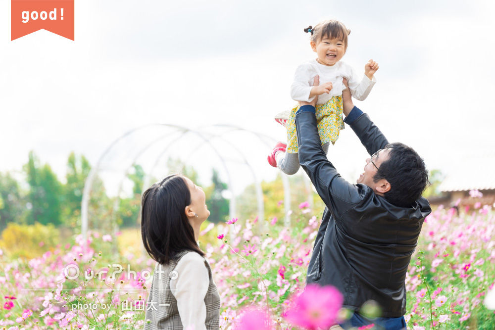 フォトギャラリー「「写真も想像以上に良くて良い思い出に」コスモス畑で家族写真の撮影