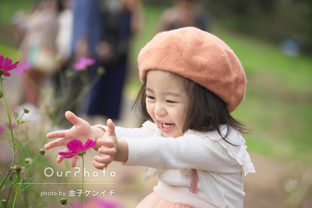 「今年の年賀状にします」秋桜の幻想的な風景の中で家族の撮影