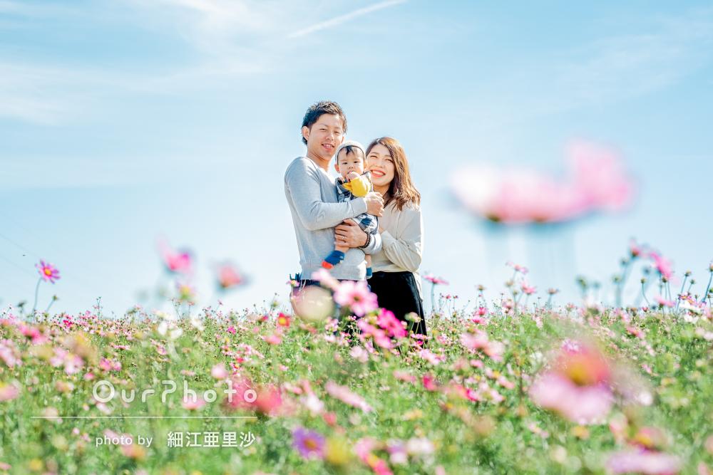 コスモスに囲まれて幸せと家族愛を感じる家族写真の撮影