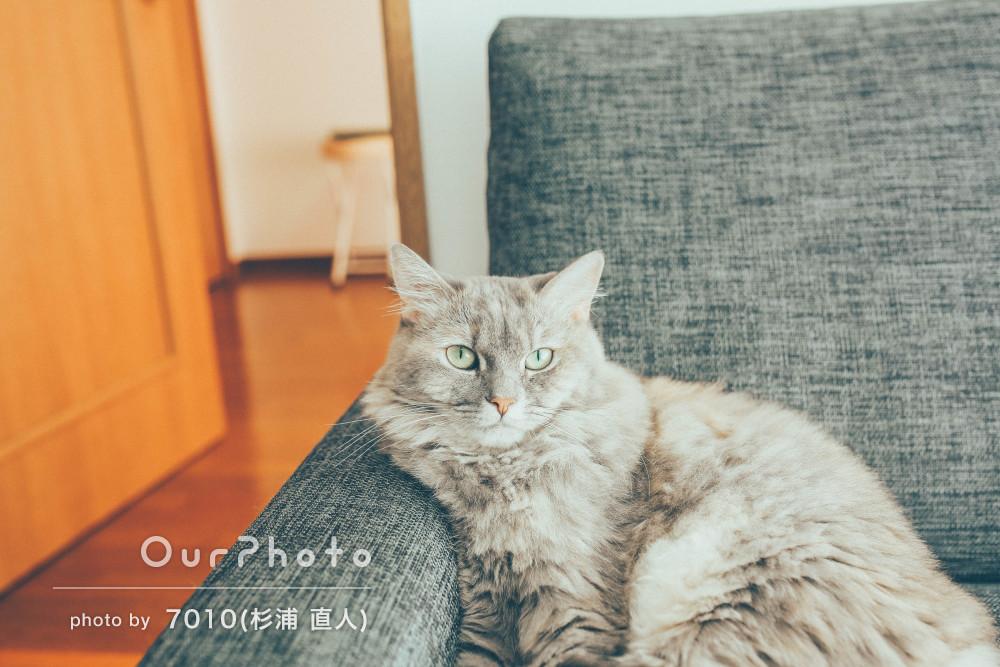猫ちゃんと一緒に穏やかな時間の流れを感じる家族写真の撮影