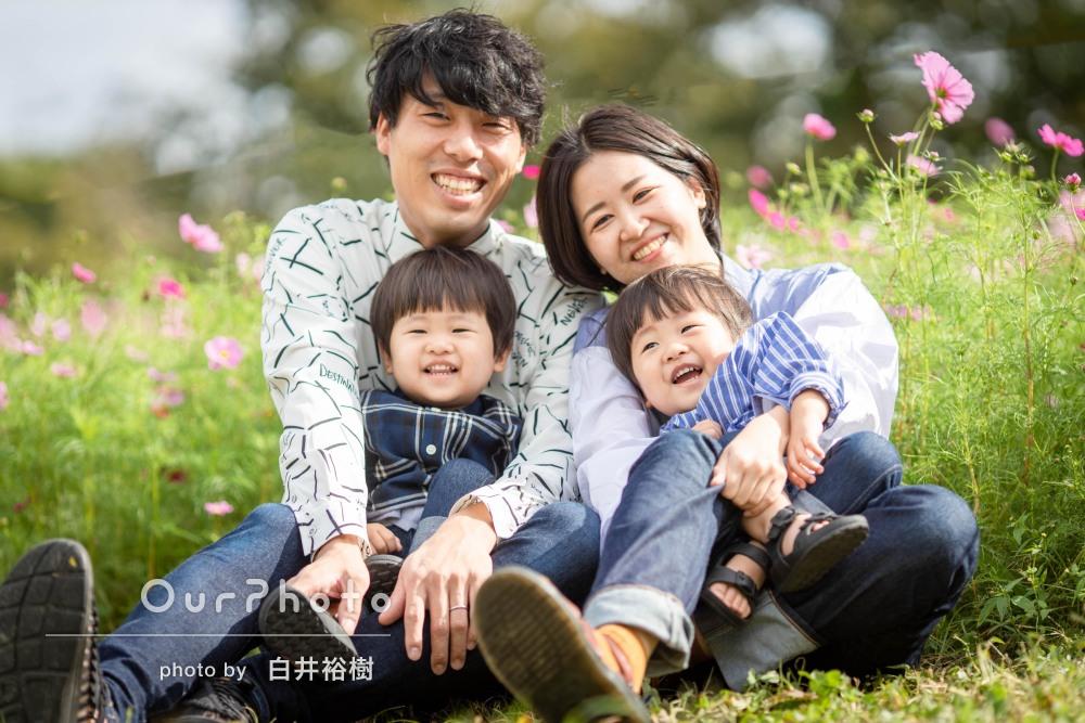「素敵な写真ばかり」コスモス畑で2歳の双子ちゃんの家族写真の撮影