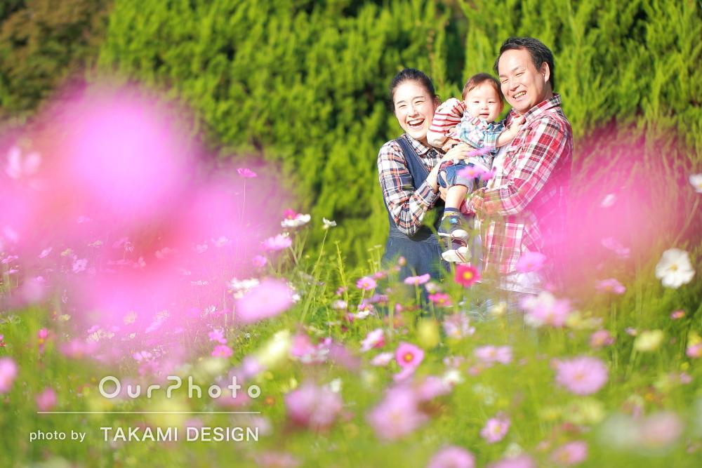 「こどものペースを尊重して」秋晴れにコスモス輝く公園で家族写真の撮影