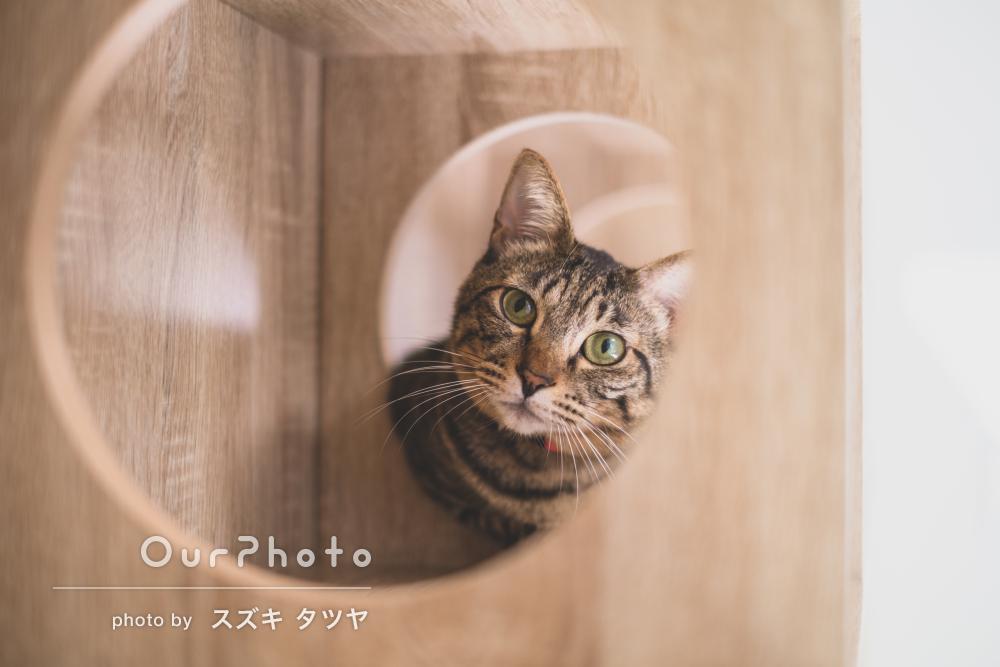 「最後にはカメラ目線!」猫ちゃん達がかわいいペットの撮影