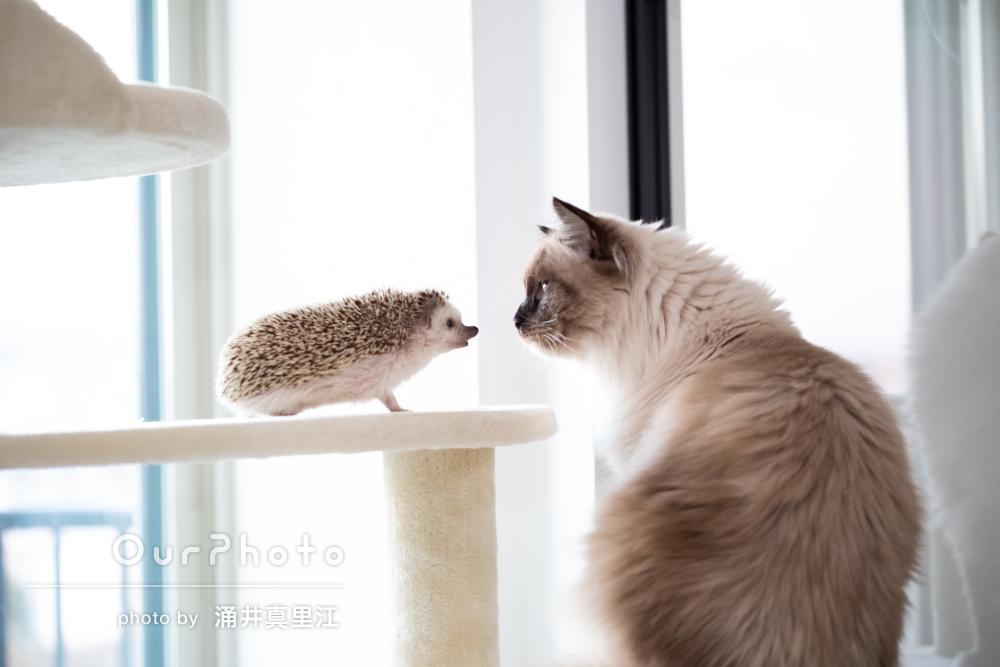 「動物たちもリラックスしている様子で素敵な写真に感激」ペット写真撮影