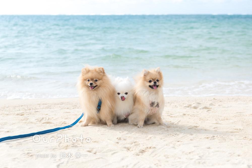 「浜辺でわんこ達の素敵な写真を撮って頂き」青い海でペット写真の撮影