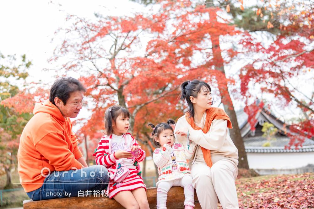 躍動感が溢れる!紅葉と鹿が共演する風流な公園でご家族の撮影