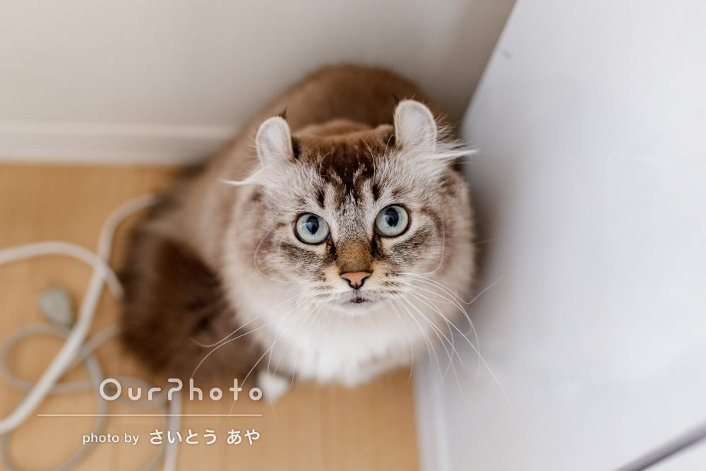 仲良し二匹の猫ちゃんがかわいい!ご自宅でのペット写真の撮影