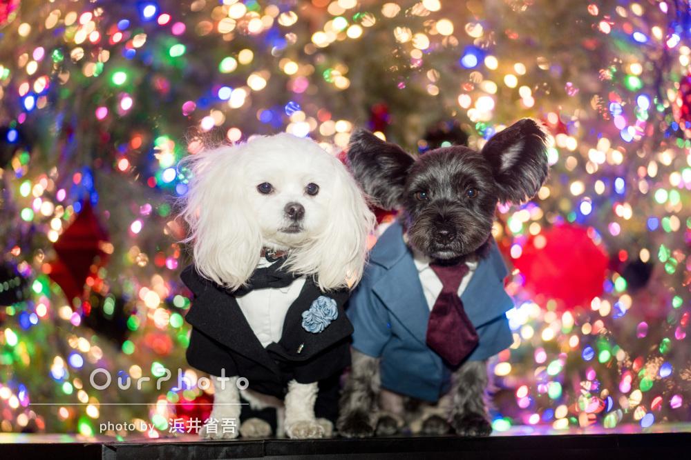 クリスマスイルミとドレスアップしたワンちゃんのロケーション撮影