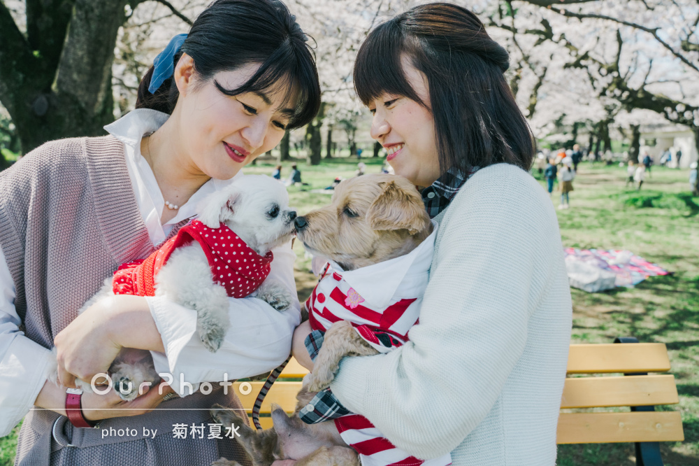「一生の記念になります」満開の桜の木の下で可愛らしい愛犬と写真撮影