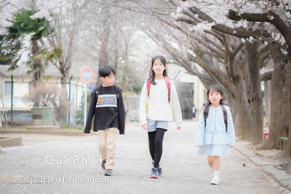 ランドセルと桜が春を感じさせる入学祝いの撮影