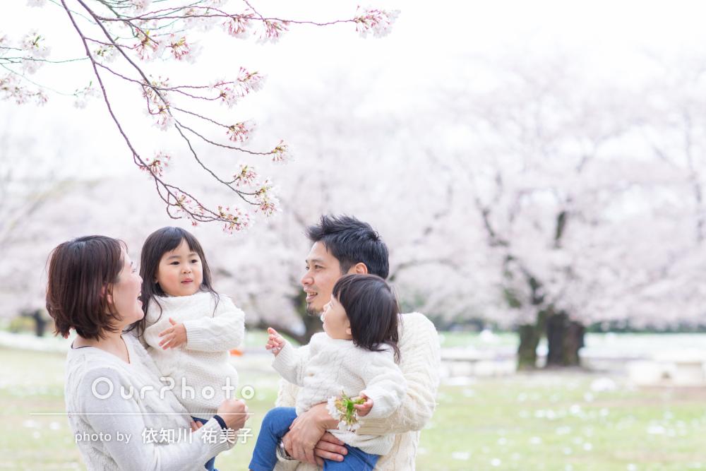 「終始優しい雰囲気と笑顔」桜満開な中での自然体な家族写真の撮影