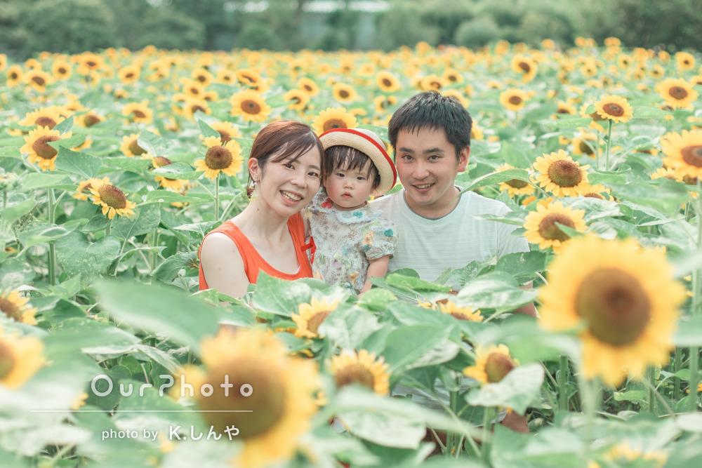 「あこがれのひまわり畑の中での家族写真!」家族のお出かけ写真撮影