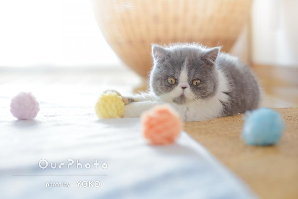 「新しい家族を可愛く撮影していただきました」ご自宅で猫ちゃんとの撮影