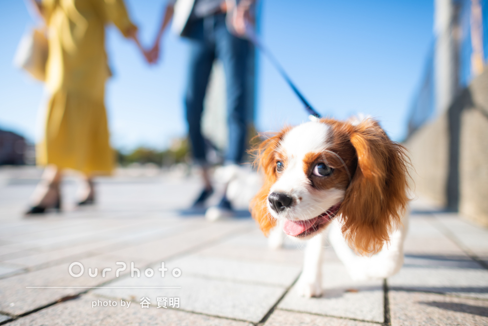 「自然な感じが撮れてすごく良かった」愛犬と一緒に家族写真の撮影