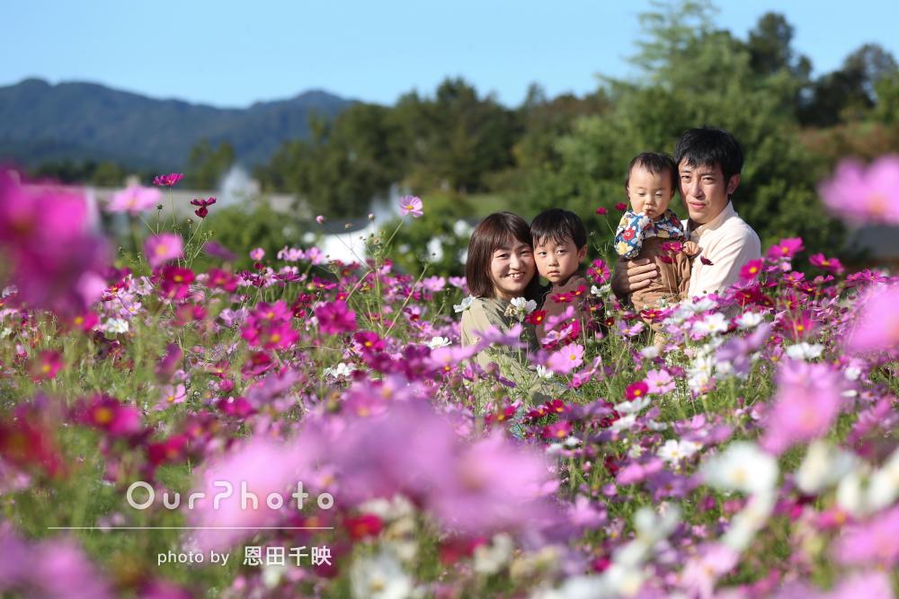 「充実した時間と宝物をありがとう」美しいコスモス畑で家族写真の撮影