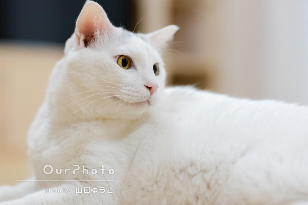 「とてもキレイでした!」猫達の6歳の誕生日の記念にペット写真の撮影