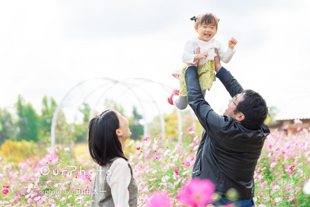 「写真も想像以上に良くて良い思い出に」コスモス畑で家族写真の撮影