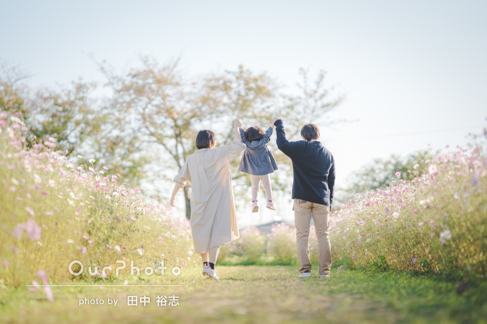 「遠くから来てくれてとてもありがたかった」コスモス畑で家族写真の撮影
