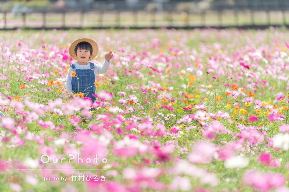 「優しい写真ばかりで大満足」お花畑の中で元気いっぱいな家族写真の撮影