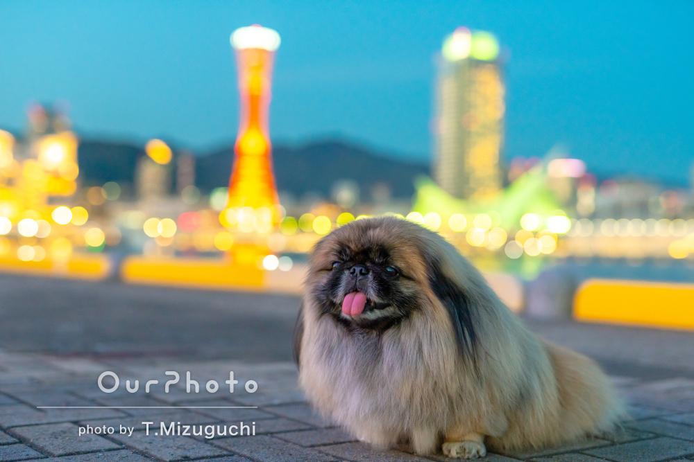 「撮影でも普段の表情を出すことが出来ました」愛犬のペット写真の撮影