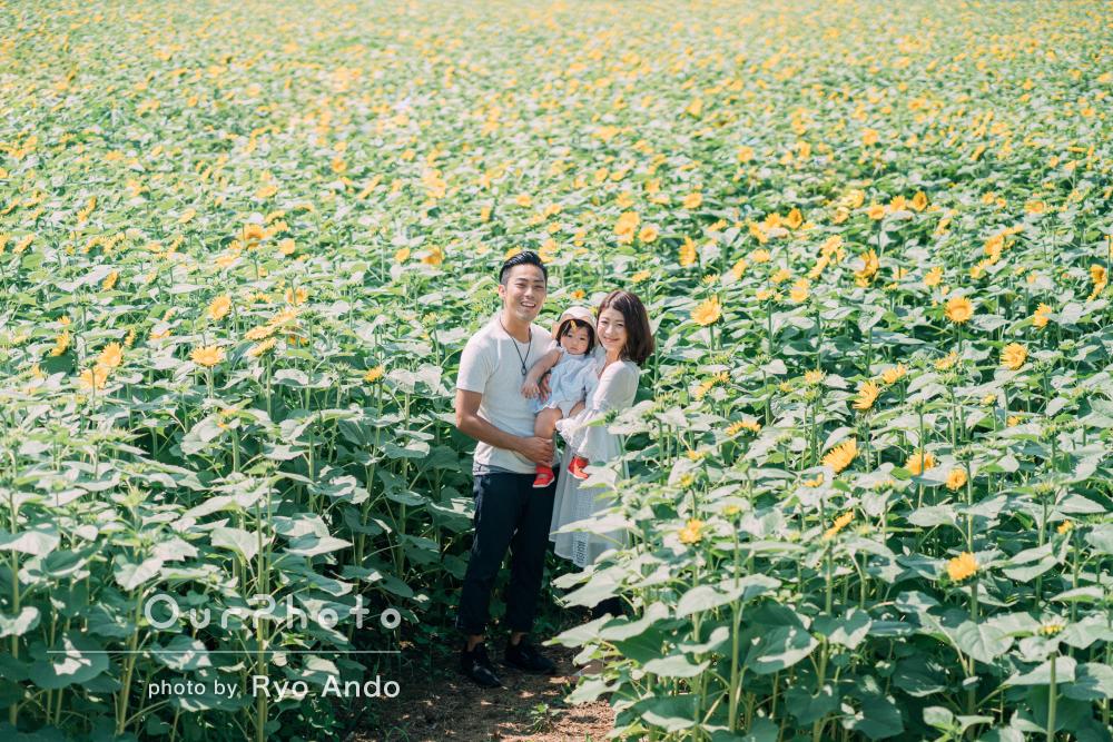 絵画のような一面のひまわり畑!夏の家族のお出かけ写真撮影