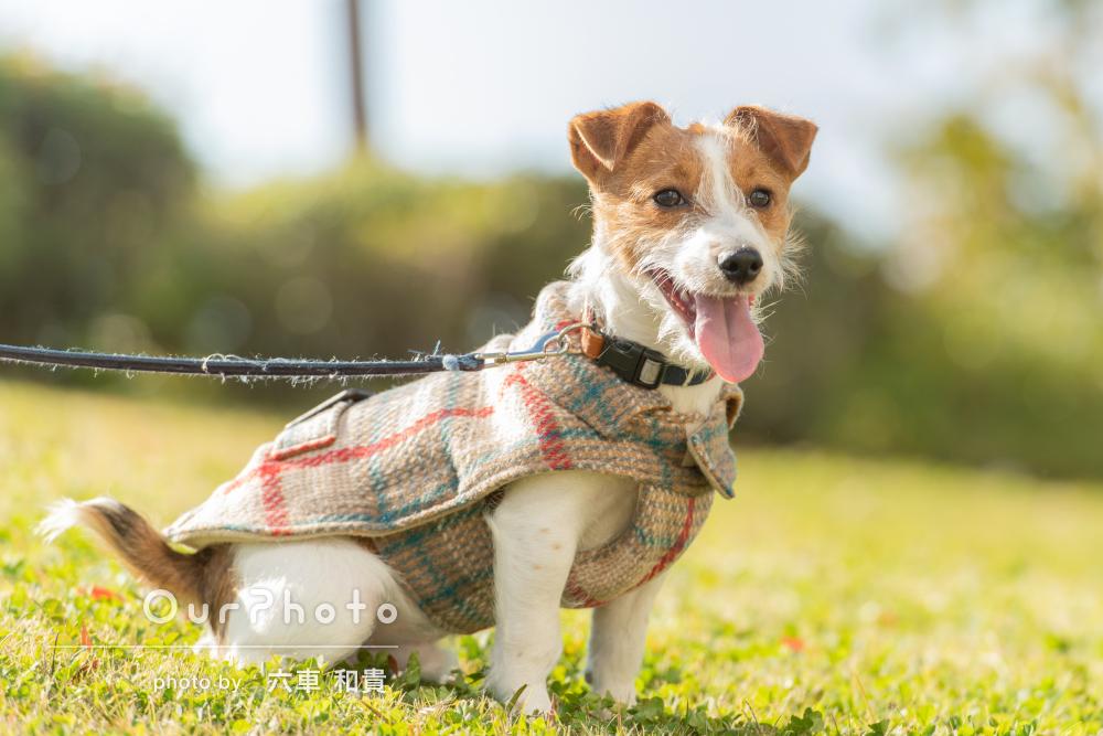 「すばしっこい犬の動きもきれいに」愛犬の6ヶ月記念にペットの撮影