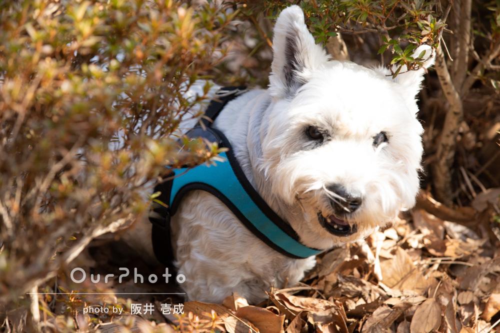 たくさんの落ち葉が冬らしい公園にてのびのびとペット写真の撮影