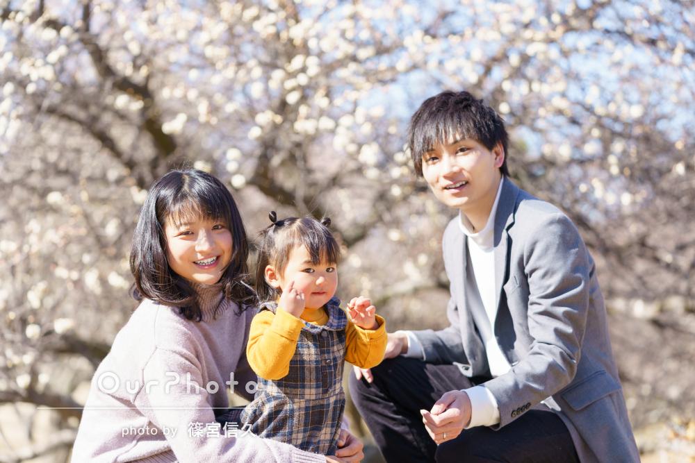 春の訪れを感じる梅園で満開の梅に囲まれかわいい女の子の家族写真の撮影