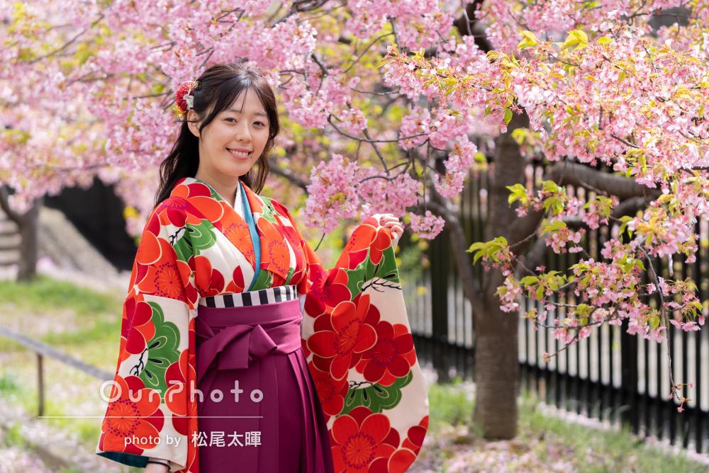 ピンクの桜が咲く公園で美しい赤い袴をお召しになって卒業記念の撮影