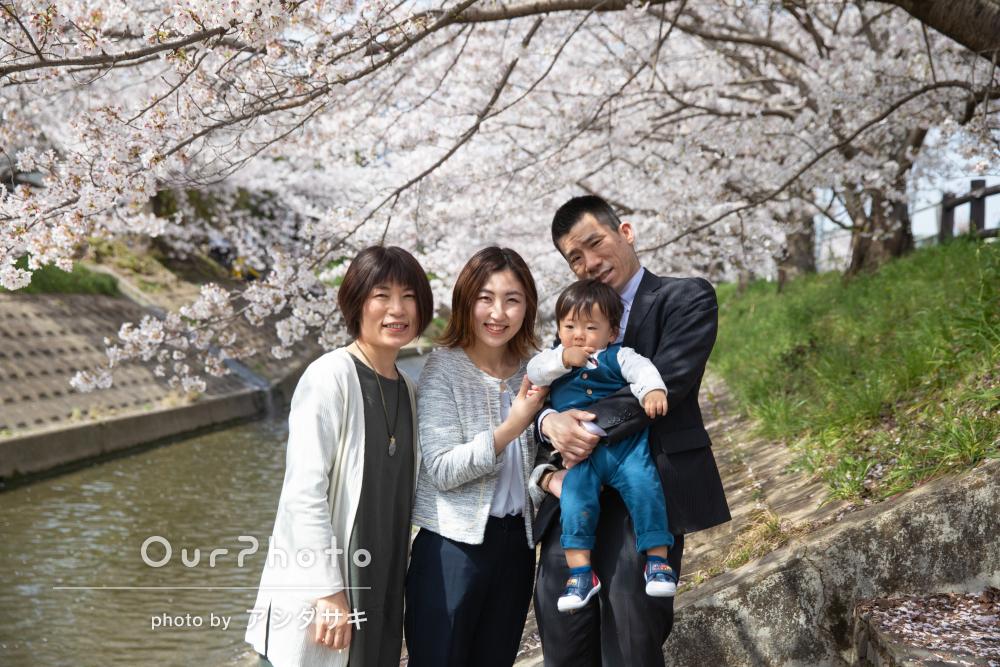 桜を背景に小さな男の子と家族の和やかなお散歩風景を撮影