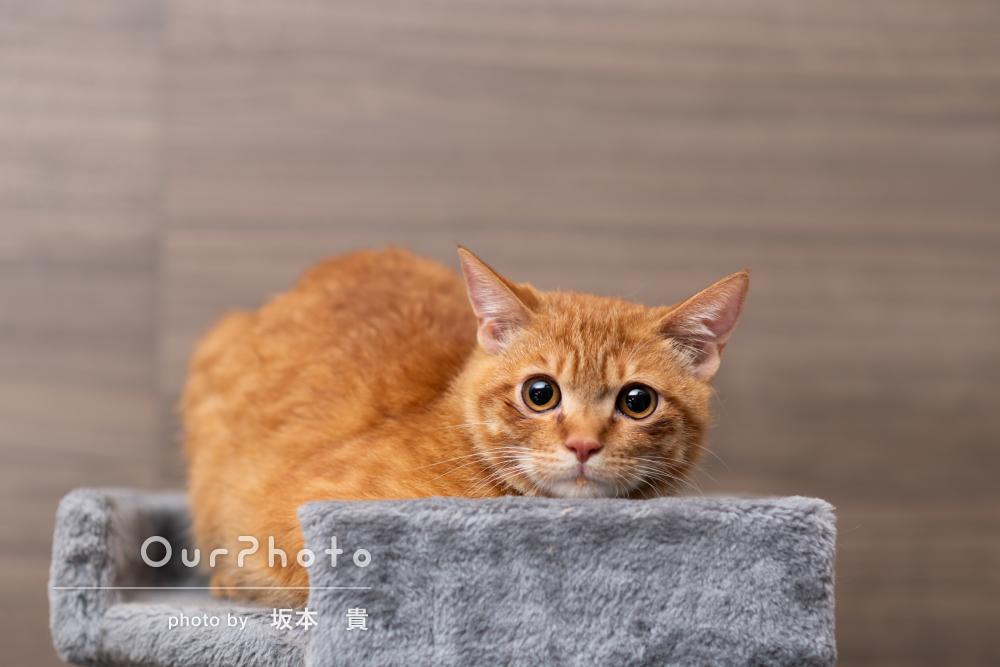 「素敵な写真をたくさん撮影していただき」自宅で猫のペット写真の撮影