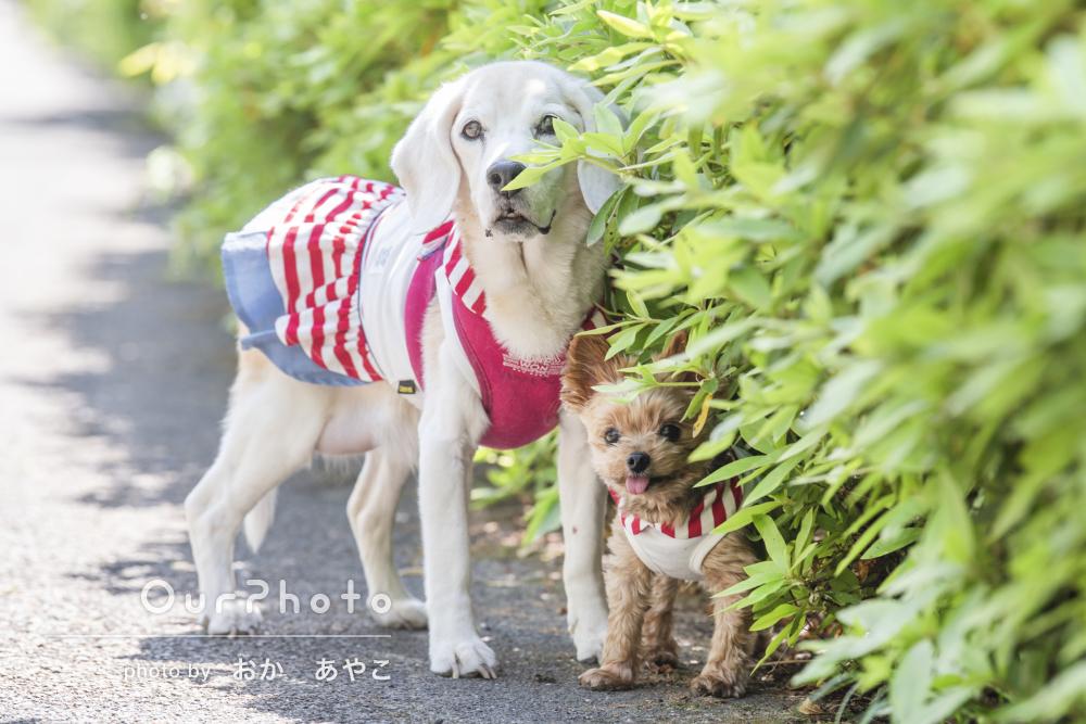 「すごく嬉しく満足してます」公園で2匹のワンちゃんのペット写真の撮影