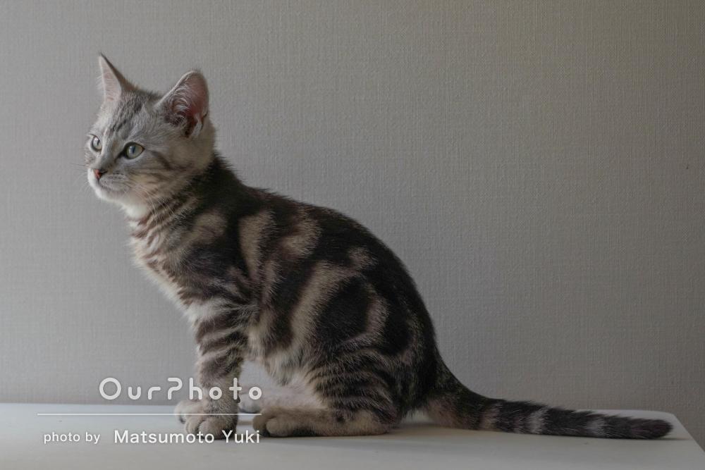 「光の使い方がとても綺麗」猫ちゃんたちの日常を収めたペット写真の撮影