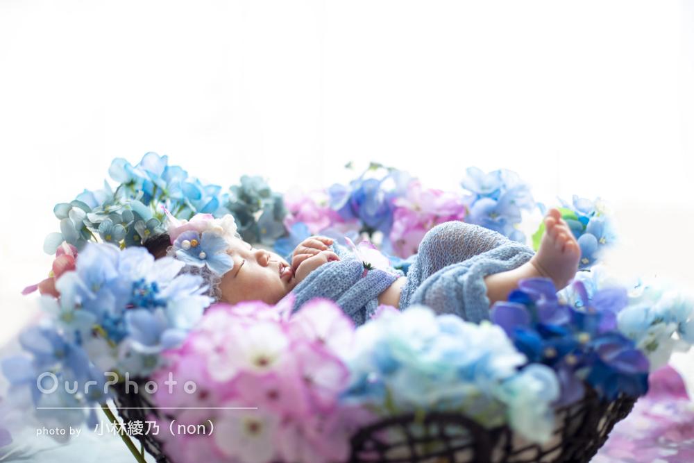 「予想以上に良かった」紫陽花で色彩豊かなニューボーンフォトの撮影