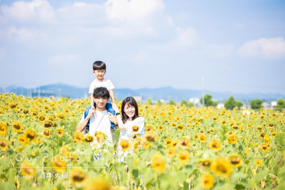 ひまわり畑に囲まれて家族みんな幸せいっぱいなマタニティフォトの撮影