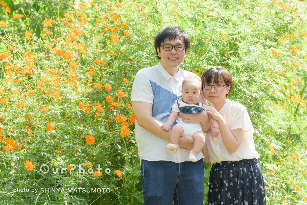 コスモスに負けないくらいの明るい笑顔がとっても素敵!家族写真の撮影