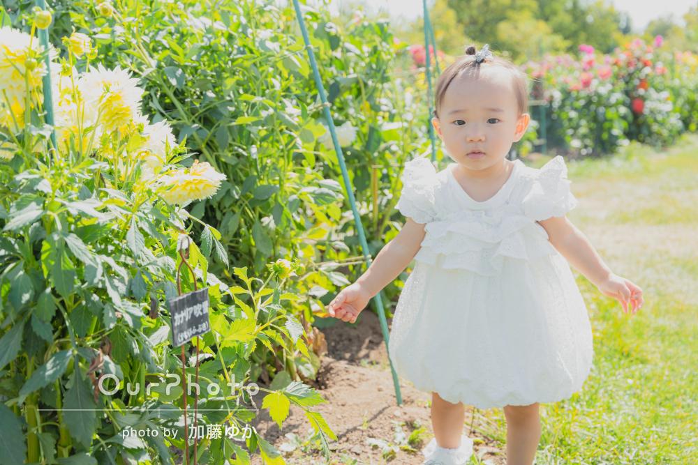 「よい表情を引き出して」色とりどりのお花に囲まれた家族写真の撮影