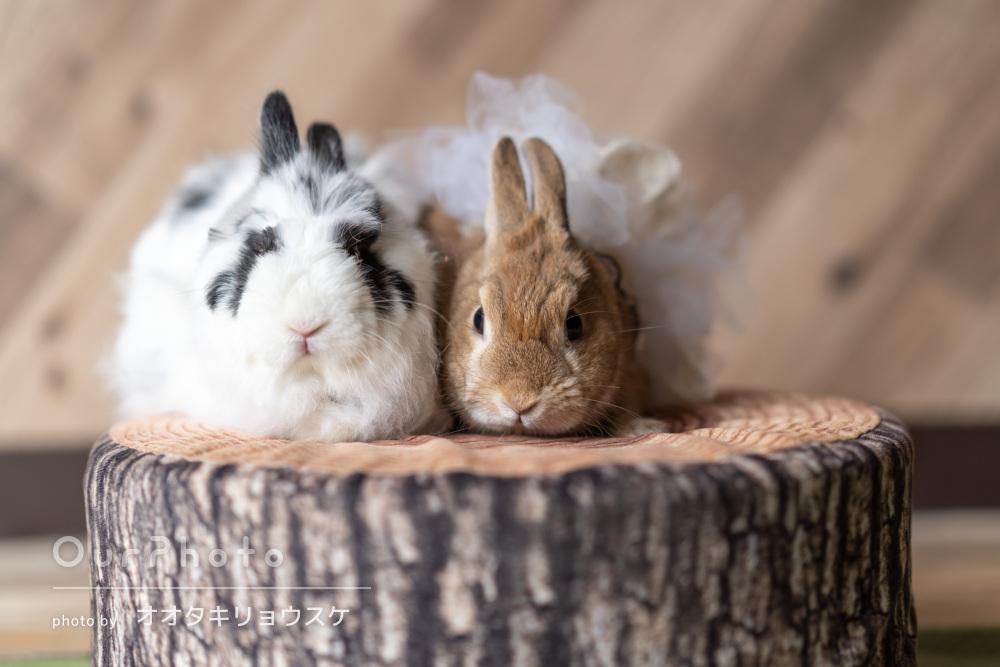 仲良し2匹のウサギちゃんと一緒にご依頼者様の愛が詰まったペット撮影