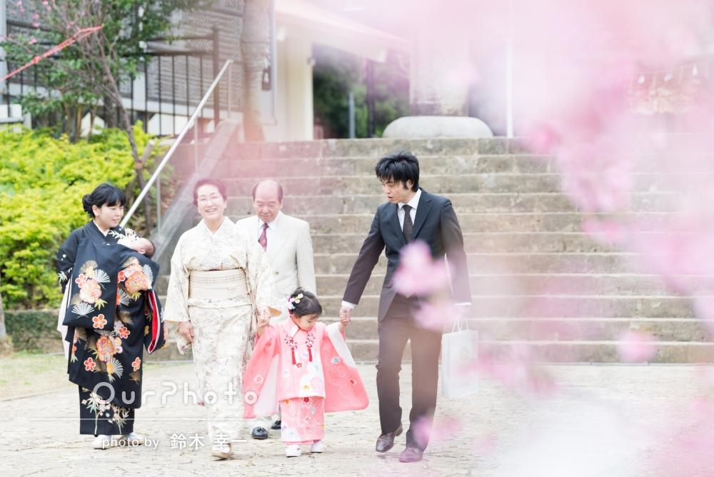 桜咲く神社の境内で!家族写真の撮影
