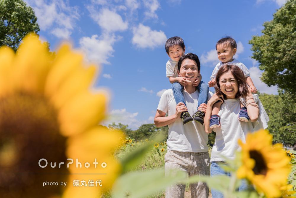 ヒマワリ畑で!4歳1歳記念に笑顔満開の家族写真の撮影