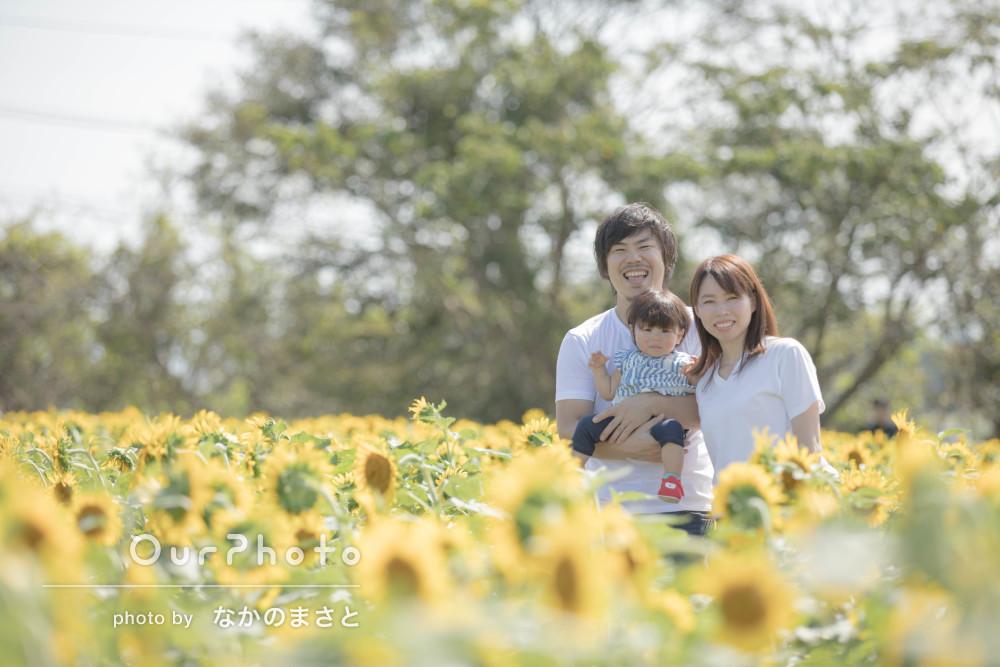 人見知りのお子様も笑顔!ひまわり畑であったかい家族写真の撮影