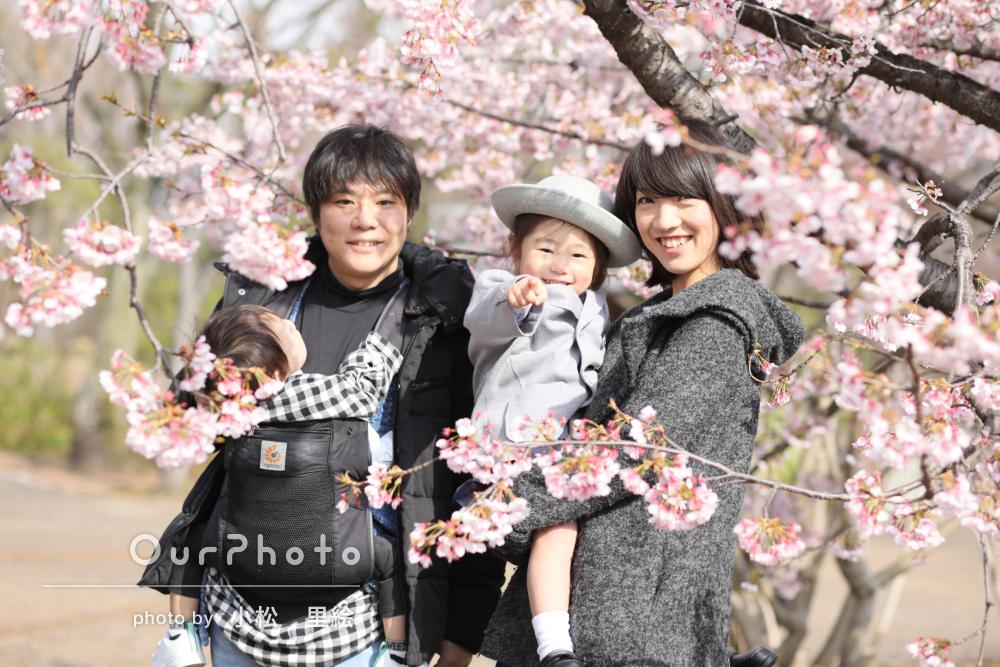 桜やチューリップと!リピーター様の入園記念の家族写真撮影