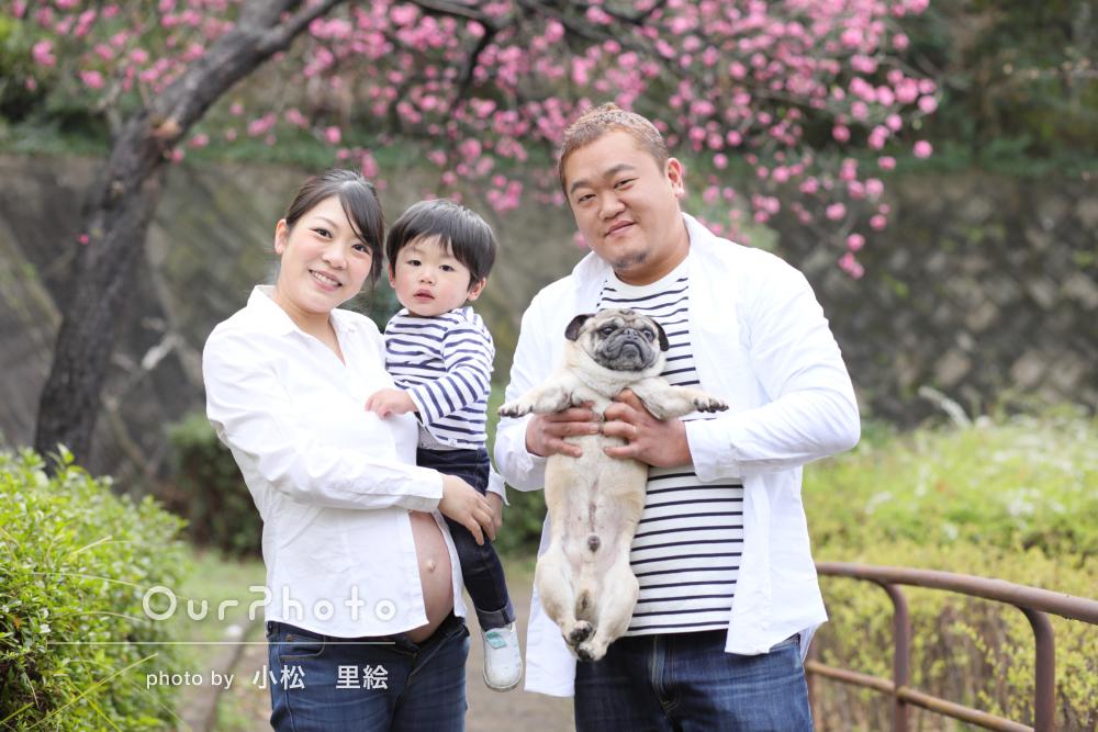 春の訪れを感じさせる早咲きの桜の中でマタニティフォトと家族写真