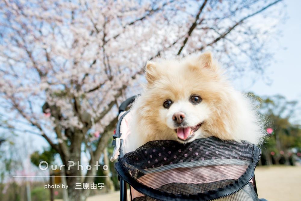 「愛犬の15歳のお誕生日を記念に撮影していただきました」ペット写真