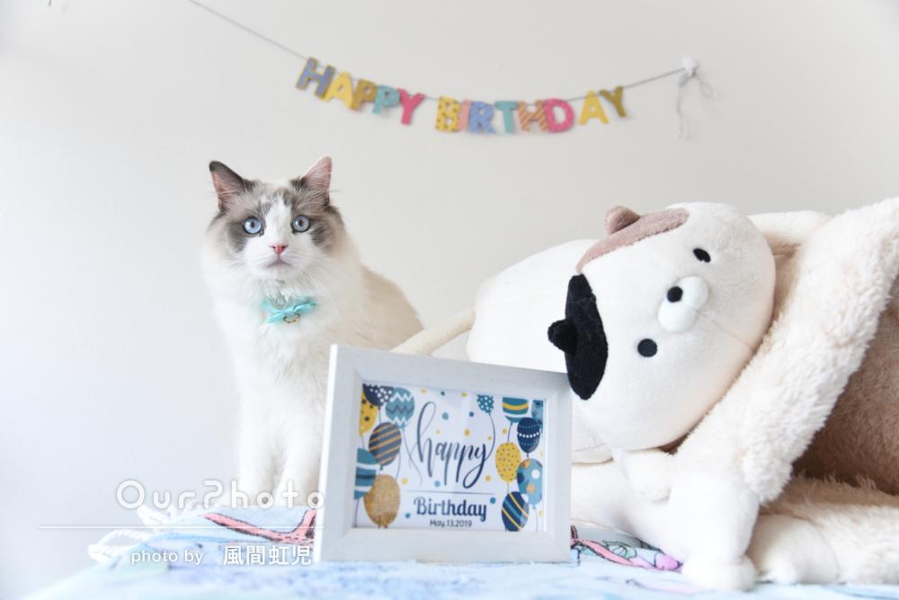 1歳おめでとう!お誕生日をむかえたネコちゃんの記念撮影